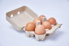 在纸箱的六个鸡蛋 图库摄影