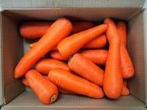 在纸箱箱子的红萝卜 免版税库存图片
