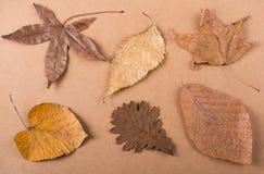 在纸纹理的干燥秋叶 库存照片