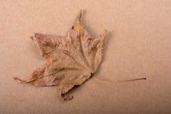 在纸纹理的干燥秋天叶子 库存图片