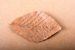 在纸纹理的干燥秋天叶子 免版税库存图片
