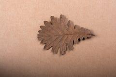 在纸纹理的干燥秋天叶子 库存照片
