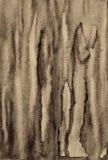 在纸纹理的抽象水彩作为背景 在乌贼属吨 免版税图库摄影