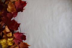 在纸背景的秋叶框架 库存照片