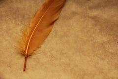 在纸背景隔绝的羽毛 免版税库存照片