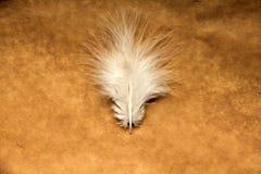在纸背景隔绝的羽毛 免版税库存图片