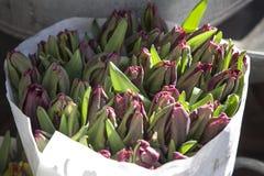在纸袋的Unblown郁金香在铝桶的待售在花店旁边待售 免版税库存照片