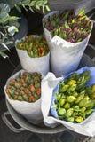 在纸袋的Unblown郁金香在铝桶的待售在花店旁边 免版税图库摄影
