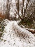 在纹理之外的积雪的肮脏的森林道路地板走道 免版税库存照片