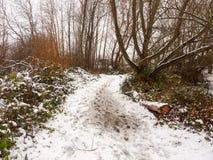 在纹理之外的积雪的肮脏的森林道路地板走道 免版税库存图片