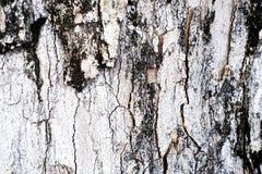 在纹理白色棕色的老木果皮和黑 免版税库存照片