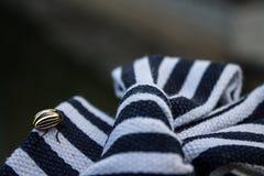 在纺织品的镶边的科罗拉多甲虫镶边了弓 免版税库存图片