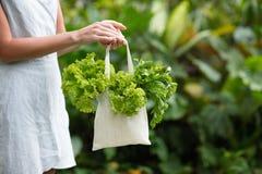 在纺织品袋子的绿色莴苣 库存图片