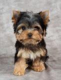 在纺织品背景的小狗 免版税库存图片