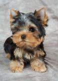 在纺织品背景的小狗 免版税库存照片