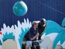 在纽约水族馆38的海狮展示 免版税库存图片