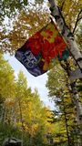 在纽芬兰的秋天 库存图片