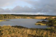 在纽芬兰,加拿大的自然 免版税库存照片