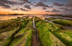 在线岩层的绿色青苔和日落背景 免版税库存照片