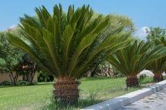 在线的小棕榈树 免版税库存照片