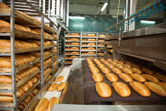在线的热的被烘烤的面包 库存图片