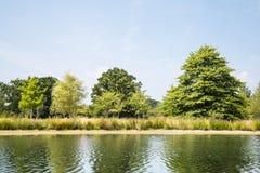 在线的绿色湖边树 免版税库存图片