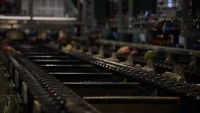 在线的芒果果子工业包装 影视素材
