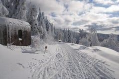 在线索sleddog种族长的Sedivacek的老地堡 库存照片