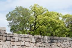 在组石头结构树墙壁之后 免版税库存图片