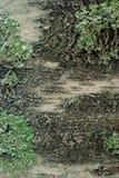 在结冰期间的白桦树皮 库存图片