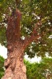 在结构树下 图库摄影
