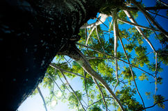 在结构树下 免版税库存图片
