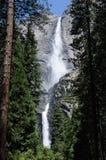 在结构树之间的Yosemite Falls 库存图片