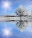 在结构树冬天附近的冻结湖 库存图片