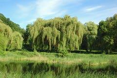 在结构树垂柳的湖 库存图片