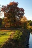 在结构树旁边的秋天运河 库存照片