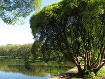 在结构树杨柳附近的湖 免版税库存图片