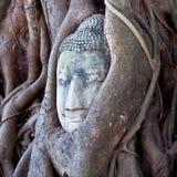 在结构树根的Buddhas题头,泰国 免版税库存照片