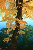在结构树水的秋天 免版税库存图片