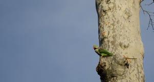 在结构树的一只鹦鹉 免版税库存照片