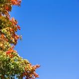 在结构树的五颜六色的秋叶蓝天 免版税库存图片
