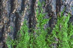 在结构树的吠声的绿色青苔 免版税图库摄影