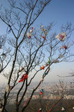 在结构树的垃圾或垃圾 免版税库存照片