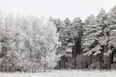 在结构树的树冰 免版税库存照片