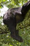 在结构树的熊靶垛 免版税库存图片