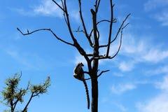 在结构树的猴子 免版税图库摄影