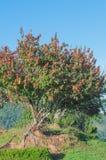 在结构树的红色花 免版税图库摄影