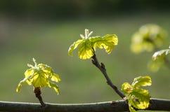 在结构树的绿色叶子 免版税库存照片