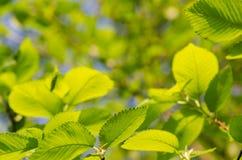 在结构树的绿色叶子 库存照片
