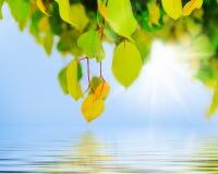 在结构树的绿色叶子 免版税库存图片